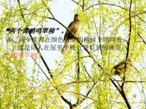 绝句杜甫两个黄鹂鸣翠柳是描写春天的吗