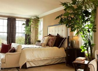 卧室植物风水(卧室放什么植物风水好)