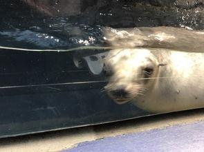 otter的关西之旅 1岁宝宝的大阪和京都