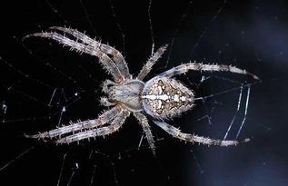蜘蛛织网科学小知识