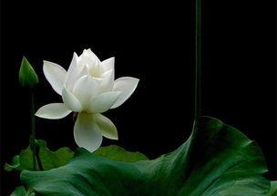 圣凯法师 禅悟是一种天地独尊的绝对孤独