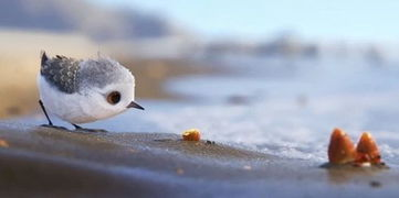 鹬yu,鹬蚌相争)短片中的小鹬简直萌化人心,故事颇有寓意,触动人心.