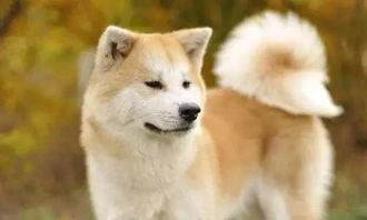 十大最美狗狗 第一名竟然是它