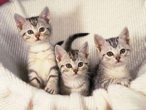 宠物猫咪图动物图片,,