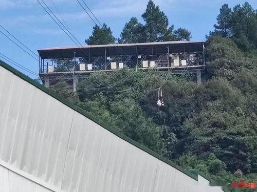 ▲网友爆料称有人员在重庆万盛奥陶纪公园玩高空项目时不幸坠落.