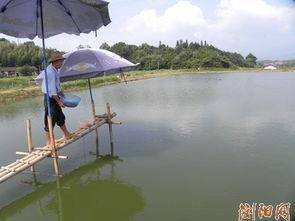 湖南浏阳市水产养殖户引进养殖两千尾鸭嘴鱼匙吻鲟