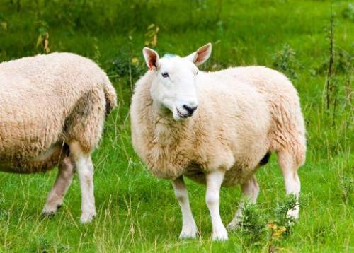 1967年属羊的人2018年运势运程如何(1967年属羊的人2018年运势运程如何)