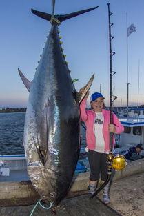加拿大12岁女孩钓起280公斤重的巨型金枪鱼