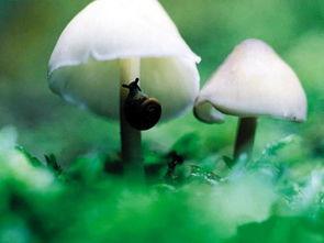 与蘑菇有关的诗词