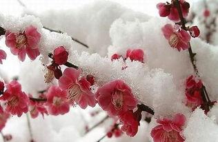 关于描写雪景的句子100
