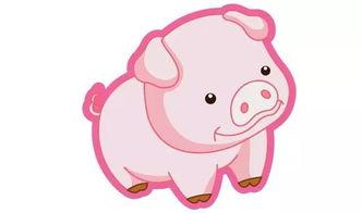 猪在狗的运程如何