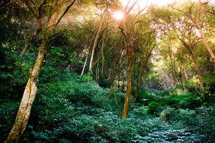 小树林-行走的风景