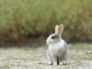 属兔佩戴什么招财最有灵气(属兔人最适合佩戴什么饰品)