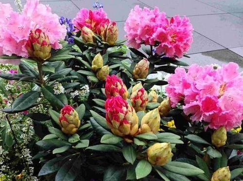 怎样用骨粉养花