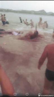 东戴河鲨鱼出没还咬伤人 真相 鲸鱼三亚搁浅