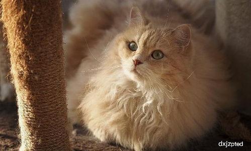 猫咪的毛游戏猫咪升级