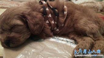 求给小狗狗取个好听点的名字,是MM.
