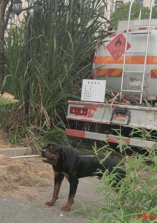 小区散步遭烈性犬咬伤,8岁女孩昏迷住院23天