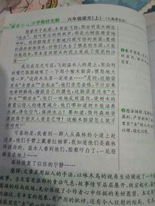 保护树木的高中作文