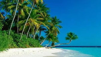 凉爽-三亚会议公司 海南的温暖只有 岛民 才知道