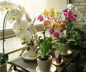 家庭养花驱虫好方法
