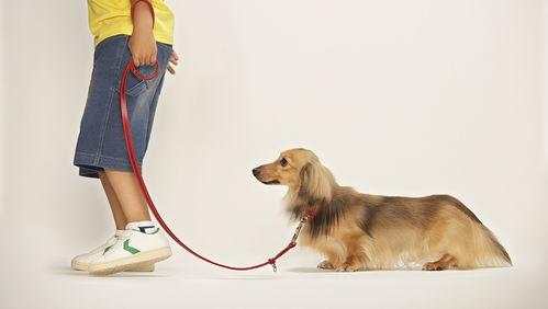 合肥就养犬公开征求意见16岁以下不能单独遛狗