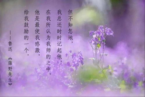 关于粉色的花的诗句