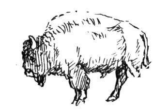 牛的简笔画 动物简笔画 涂色图片