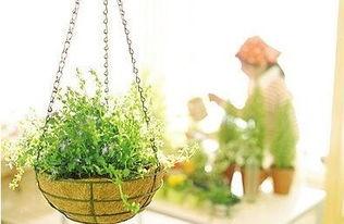 怎么养花才能长的好呀