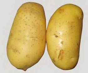 土豆的美容护肤小窍门你知道吗