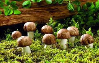 长完蘑菇棉籽团可以养花吗