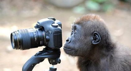 乌干达、卢旺达探访大猩猩野生动物园