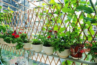阳台养花教程