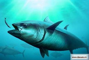 金枪鱼名字的由来 金枪鱼名字的来源