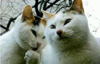 抱歉有钱真的是能为所欲为的猫咪表情包