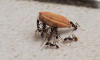 我发现蚂蚁作文200字