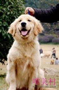 世界上最贵的狗排名(獒:犬中之69王,不)