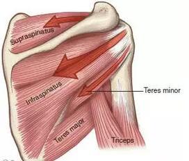 冈下肌的训练方法