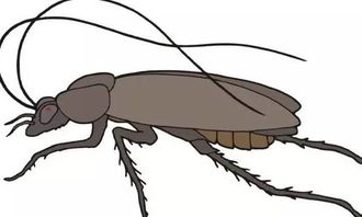 蟑螂的小常识