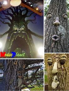 外星来客 世界各地最诡异的恐怖树木