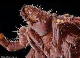 图为颇似外星生物的昆虫.-微距拍奇特昆虫世界