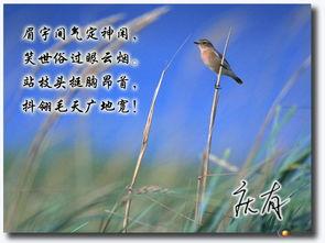 描写麻雀的诗歌