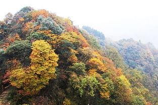 2013大风堡原始森林旅游 大风堡原始森林旅游景
