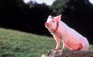 像 猪 一样自由丨纪念王小波逝世20周年