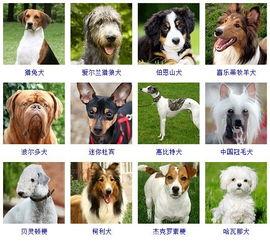 世界上最大的狗几种 带名字的