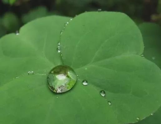养花为什么不能用自来水