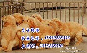 广东黄页88网