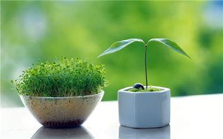 适合卧室养花草