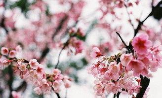 描写春天叶子的优美句子_描写春天的优美句子