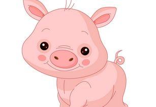 猪19771在2020运程